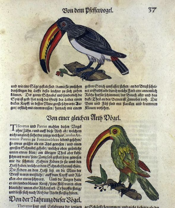 Conrad Gesner (1516-1565) - Folio with 3 woodcuts - Guianan Toucanet Toucan - Hand coloured - 1669
