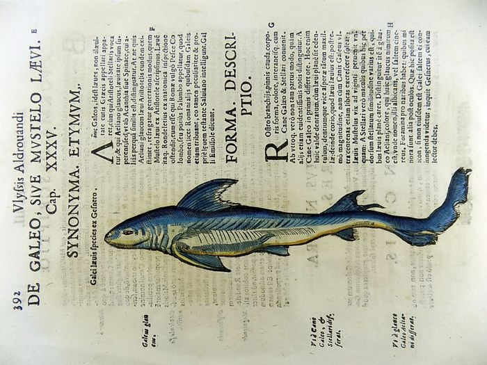 Cristoforo Coriolano b 1540; Aldrovandi - Folio woodcuts on one leaf - Shark - Folio hand coloured woodcuts - 1638
