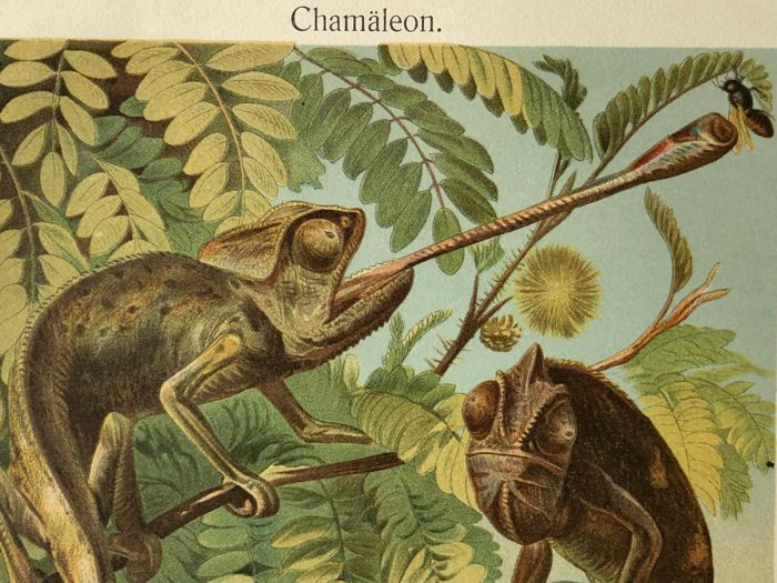 Meyers - Set of 9 antique reptile prints (1907): Snakes, cameleon, frogs, crocodile, iguana, lizard