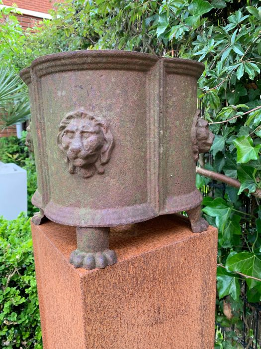 Jardinière with four lion heads - Neoclassical Style - Iron (cast), Iron (cast/wrought) - 20th century