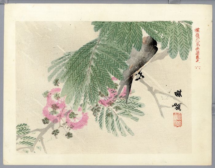 Origineel houtblok print - With signature and seal 'Bairei' 楳嶺 - Hashibuto-garasu bird - ca. 1920