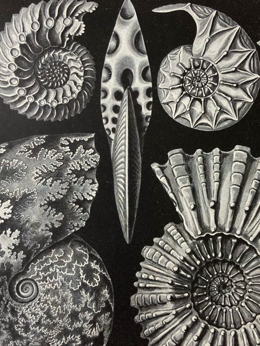 Meyers - Set of 17 antique Sea life prints (1907): ammonites, sharks, shrimp, shell, fish, octopus, sponges