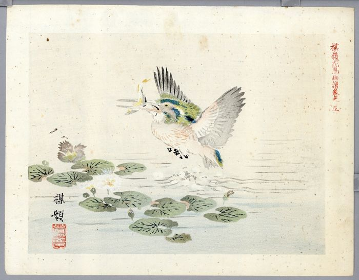 "Original Holzschnitt - Bairei 楳嶺 - Amami-yamashigi bird - From the album ""Bairei kacho gafu"" 楳嶺花鳥画譜, V - Ca. 1920"