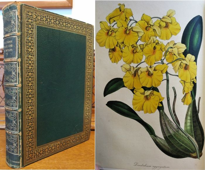 Sir Joseph Paxton - Paxton's Magazine of Botany and Register of Flowering Plants: Volume the Sixt - 1839