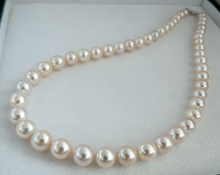 HS Jewellery 7.5 - 10.15 mm, 18Kt. Oro blanco, Perlas Akoya - Collar