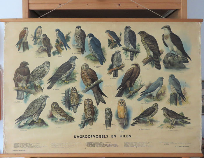 "H.J. Slijper - 1953 - Thieme (Zutphen, Nederland) - Old school plate ""Day birds of prey and owls"" - Paper on linen with wooden sticks"
