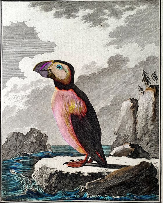 5 prints - Georges Buffon (1707-1788) - Collection handcoloured animal prints from early edition of  Buffon his famous Histoire