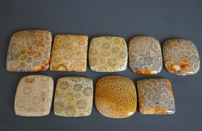 9 pcs  Corail fossile silicifié - 600.00 ct