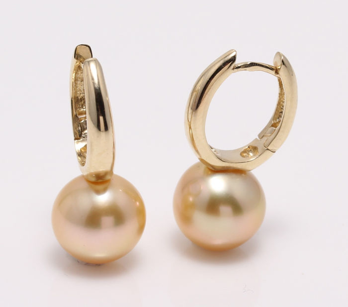 NO RESERVE PRICE - 14 kt. Yellow Gold- 10x11mm Golden South Sea Pearls - Earrings