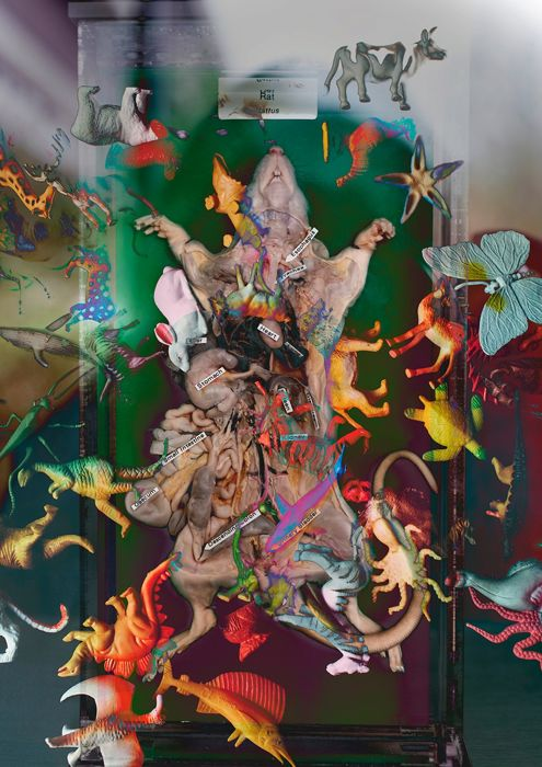 """Indra Gleizde (1991-)  - """"Rat object"""" from series """"Analysis and Other Sorceries"""""""
