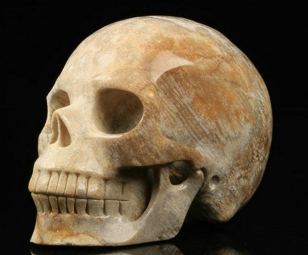 Carved Crystal Skull in Fossil Coral - 131×99×83 mm - 1179 g