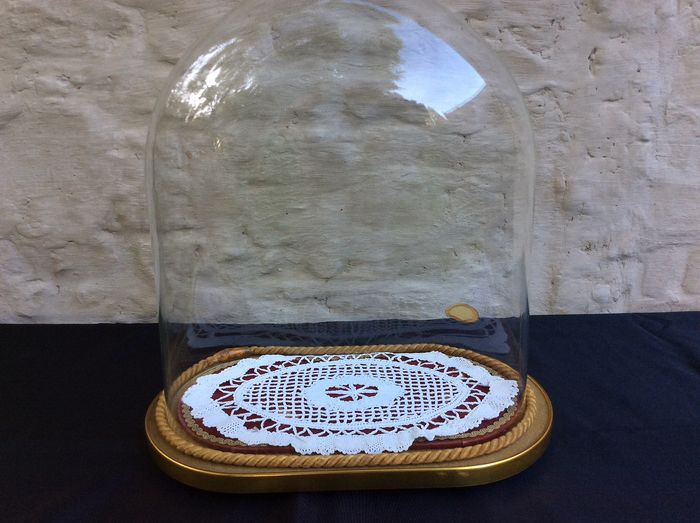 Beautiful oval glass bell jar on wooden base - Glass and wood