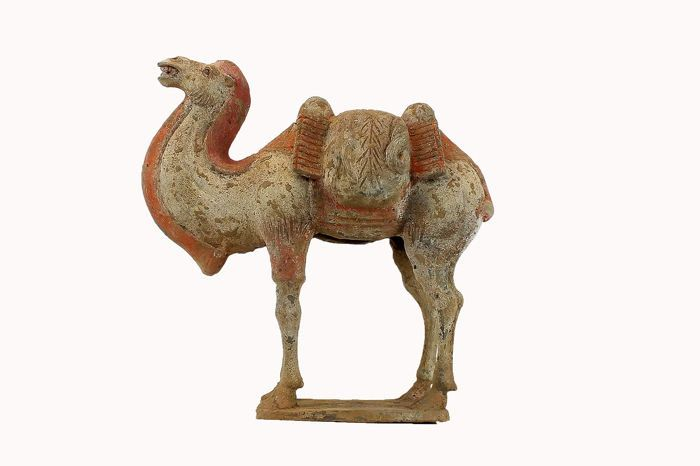 Mingqi - Terre cuite - A Superb Painted Grey Pottery Chinese Bactrian Camel, TL test, H. 33  - Chine - Dynastie Wei du Nord