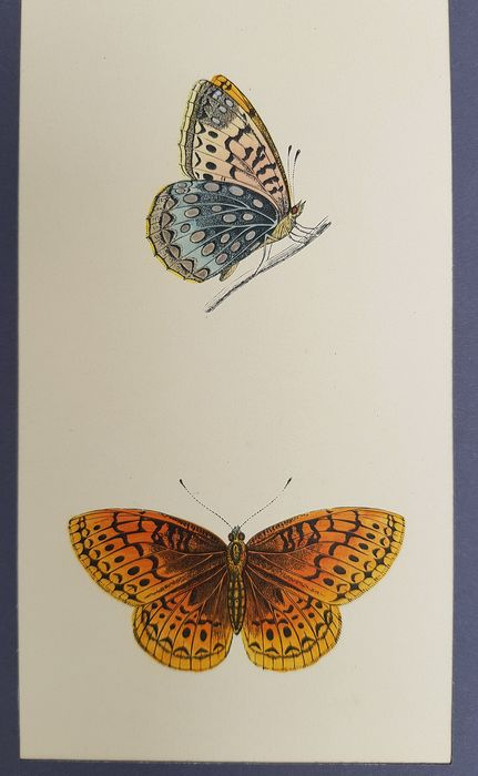 F.O. Morris /  A.F. Lydon - A History Of British Butterflies