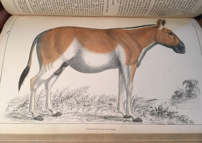 Oliver Goldsmith - A History of the Earth and Animated Nature - 1860