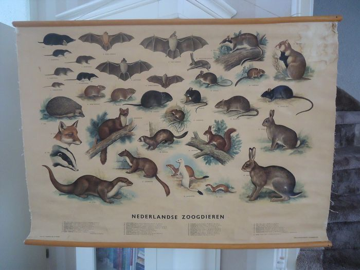 'Dutch mammals' from H.J. Slyper - Linen, Wood