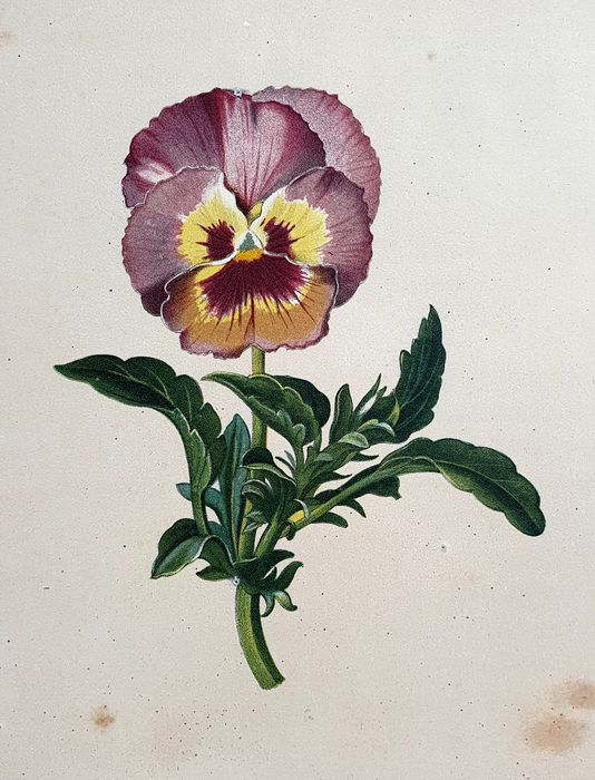 9 botanical prints - Unknown artist ( 19th century)    - Various strong fine detailed Flower prints - botanical collection
