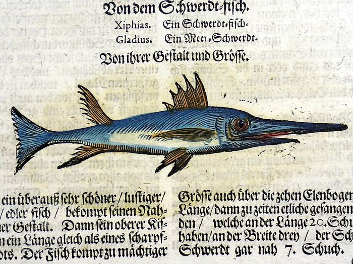 Conrad Gesner (1516-1565) - Folio with 2 hand coloured woodcuts - Swordfish, Pilot Fish - 1669