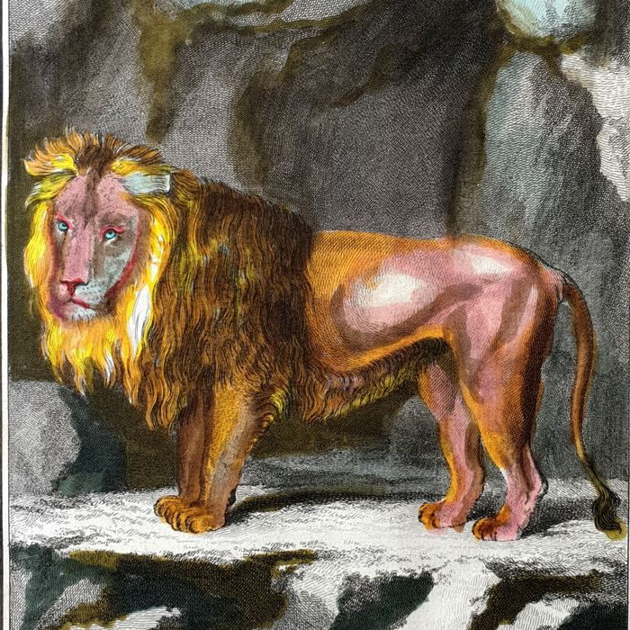 2 animal prints - Georges Buffon (1707-1788) - Portrait of the Lion and his Skeleton - handcoloured - from the first edition Buffon his Histoire