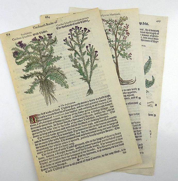3 illuminated leaves from Dodoens, Rembert (1517-1585) - A nievve herball, or historie of plantes - 6 woodcuts on 3 leaves - 1578