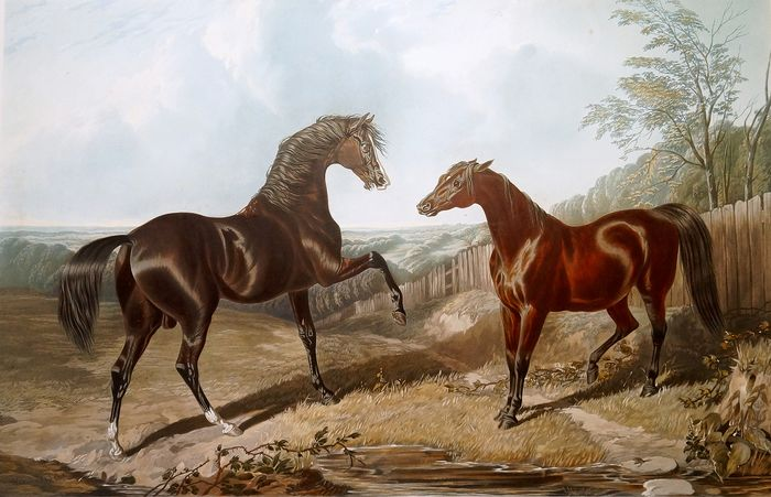 Harris & Summers - The British Stud - Hand Colored Engraving