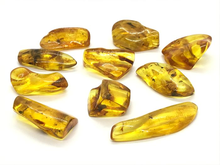 Natural Baltic Amber - 10 pieces with insects