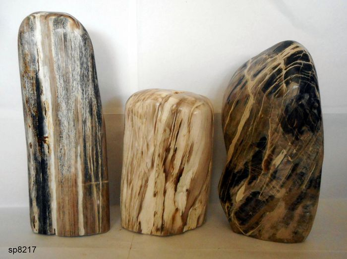 Petrified Wood logs - 4.5 kg - (3)