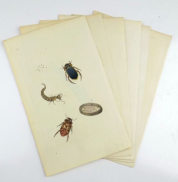 6 engravings by Edward Donovan (1768-1837) - The natural history of insects - Beetles - 1792