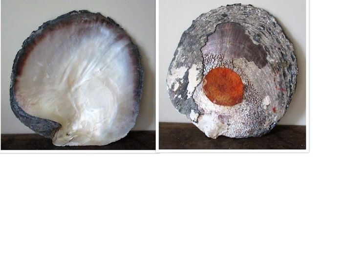 Super large oyster - shell (27 x 26 cm) - Mother of pearl