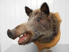 Taxidermy Auction (Decorative) - Catawiki