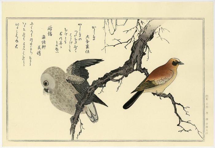 "Woodblock print (reprint) - Kitagawa Utamaro (1753-1806) - 'Eurasian jay, owl and kyoka poem' - From the album ""Myriad Birds: A Kyôka Competition""  - Heisei period (1989-2019)"