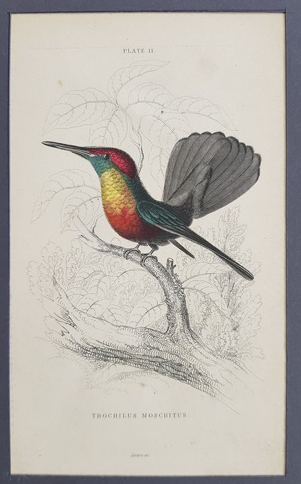 "William H. Lizars - Lot van 6 Handgekleurde Gravures uit ""The Naturalist's Library of Hummingbirds"" 1833, Jardine."