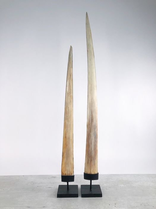 Pair of two Large Swordfish Rostrums on custom-fit pedestals - Xiphias Gladius