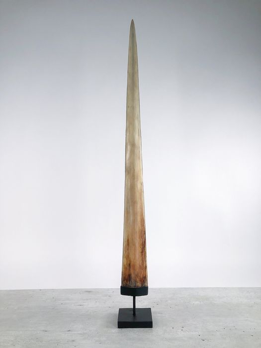 Sooka Interior - Large Swordfish Rostrum mounted on pedestal - Xiphias Gladius - Non-Cites Species - 91cm