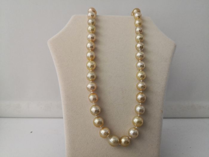 Golden south sea pearls, 10-11 mm - Necklace