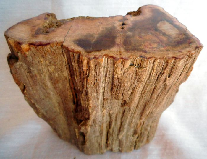 Decoration - presse papier - Petrified Wood