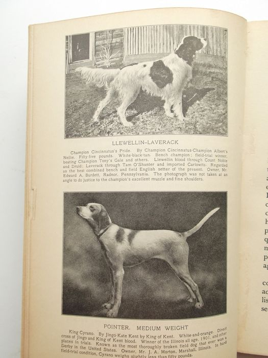 Joseph A  Graham - The Sporting Dog - with 30 photographic