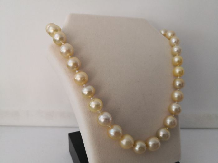 Golden south sea pearls - Necklace