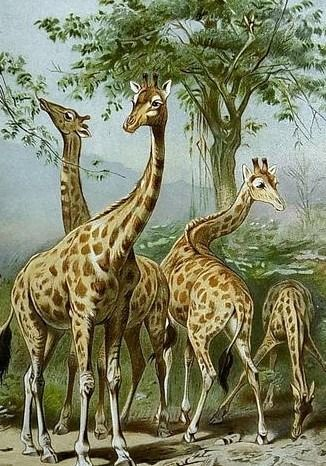 12 colour lithographs by (among others) W. Kuhnert, P.J. Smit etc. - Mammals - Seal Sea Lion Gazelle Giraffe Sloth Porcupine Otter - ca 1880