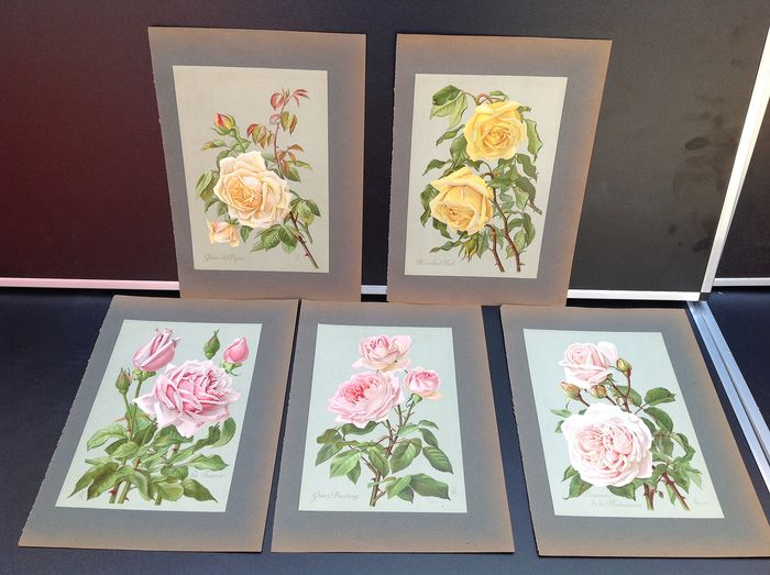 H. Friese - Collection of 5 original antique chromolithos of rose varieties (5) - Paper