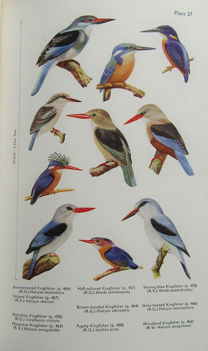 C. W. Mackworth-Praed, and Captain C. H. B. Grant - Birds of the Southern Third of Africa - 1962
