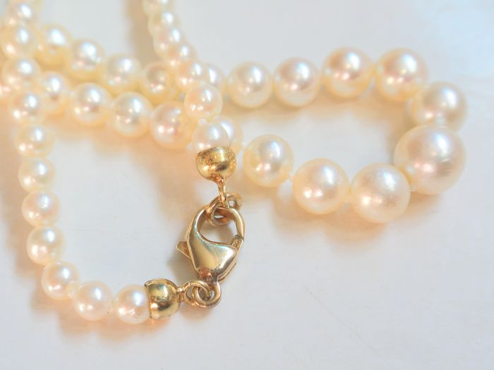 18 kt. Akoya pearls - Necklace, Course 4 - 7.5 mm