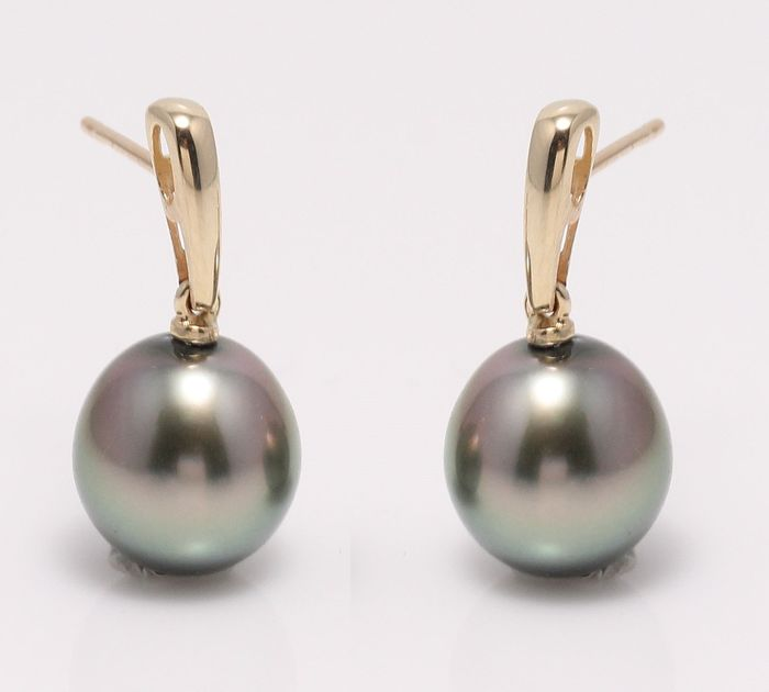 NO RESERVE PRICE - 14 kt. Yellow Gold - 10x11mm Peacock Tahitian Pearl Drops - Earrings