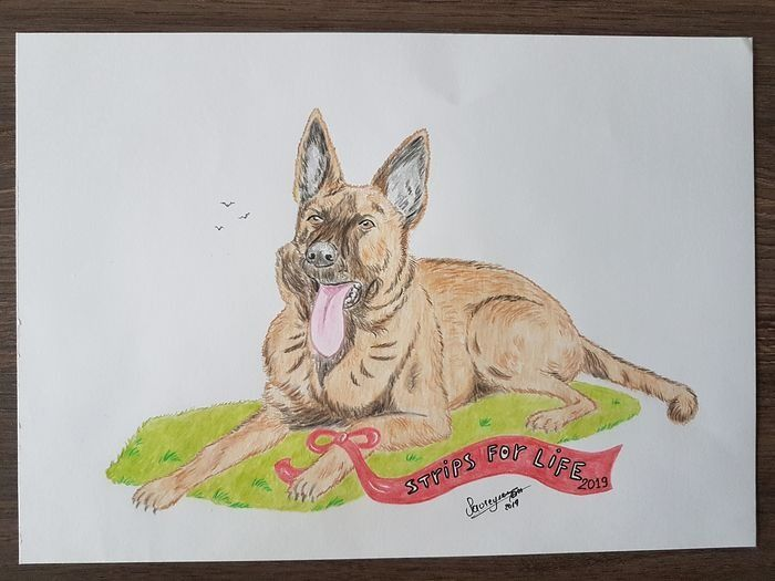 Laureysens Tom - Original art German shepherd - (2019)