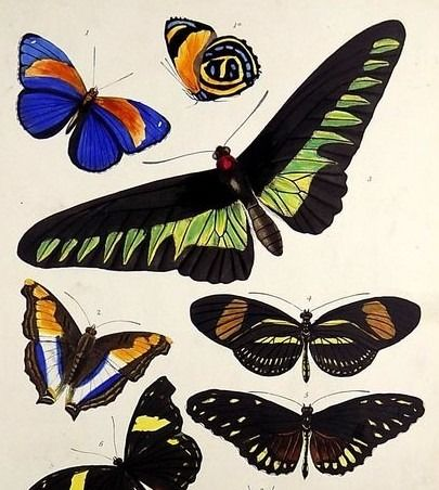 6 large hand coloured steel engravings in original hand colour - J. W. Lowry (1803–1879) - Entomology: Butterflies, Moths, Crickets, Beetles - 1830