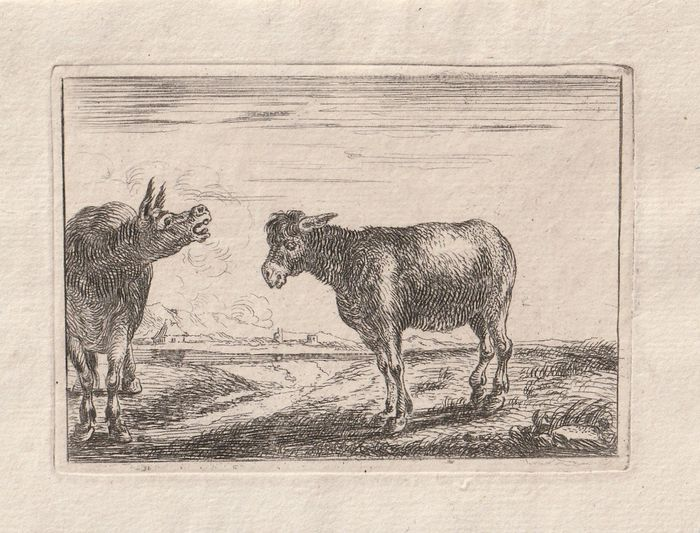 Theodorus van Kessel, after Jan van den Hecke I - Two donkeys