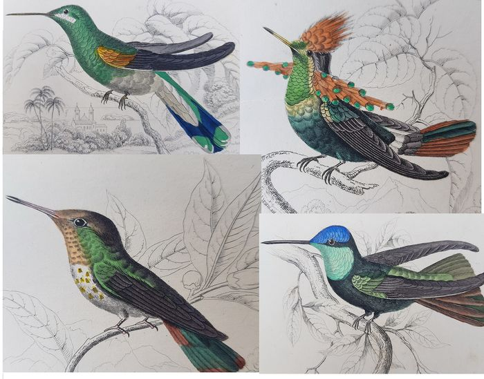 "William H. Lizars  - Lot van 9 Handgekleurde Gravures uit ""The Naturalist's Library of Hummingbirds"" 1833, Jardine."