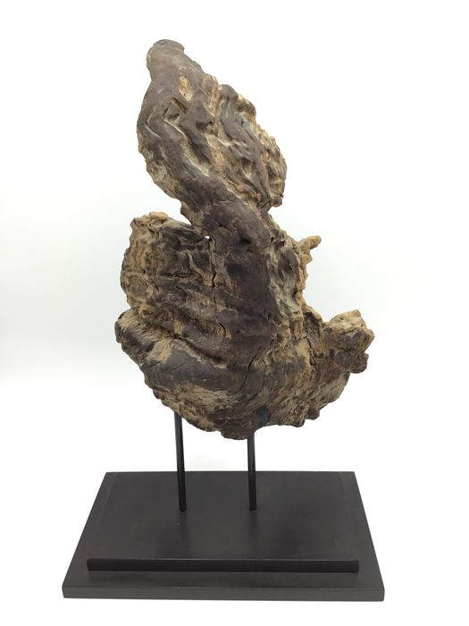 Petrified Fossil Root - Wood