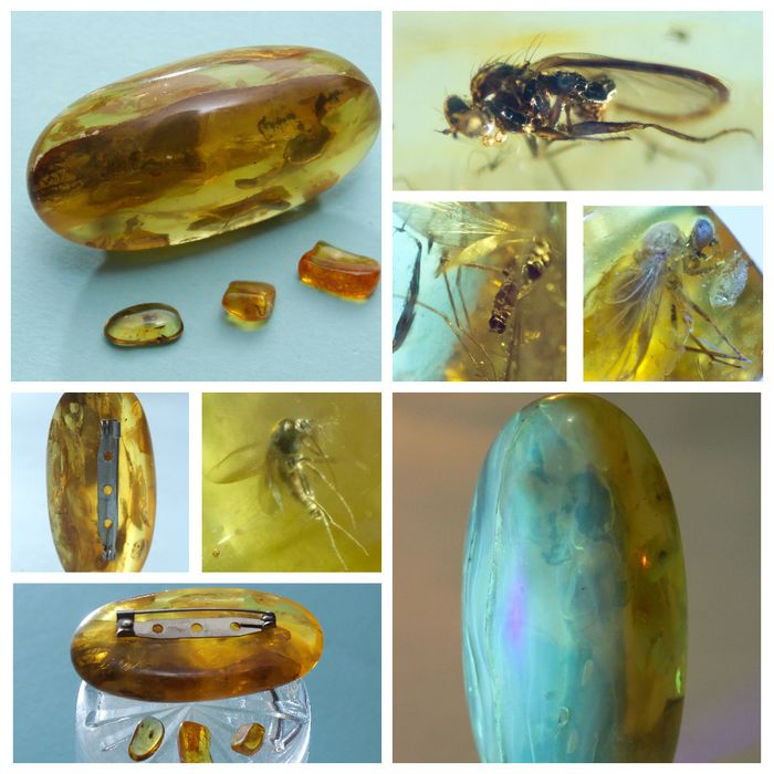 Amber - Brooch, Set, Brooch with 3 stones as a gift - Natural (untreated)