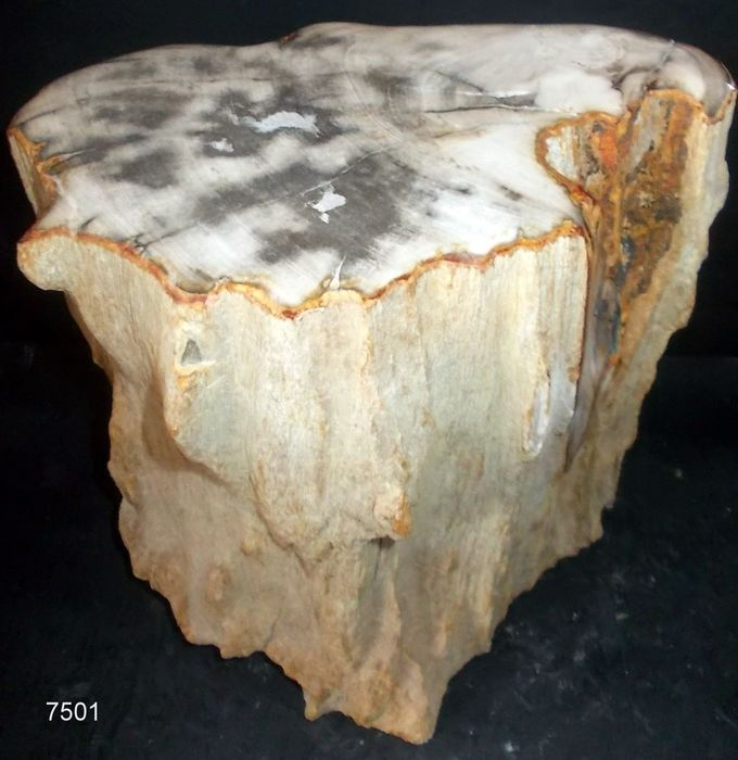 Pedestal - Petrified Wood